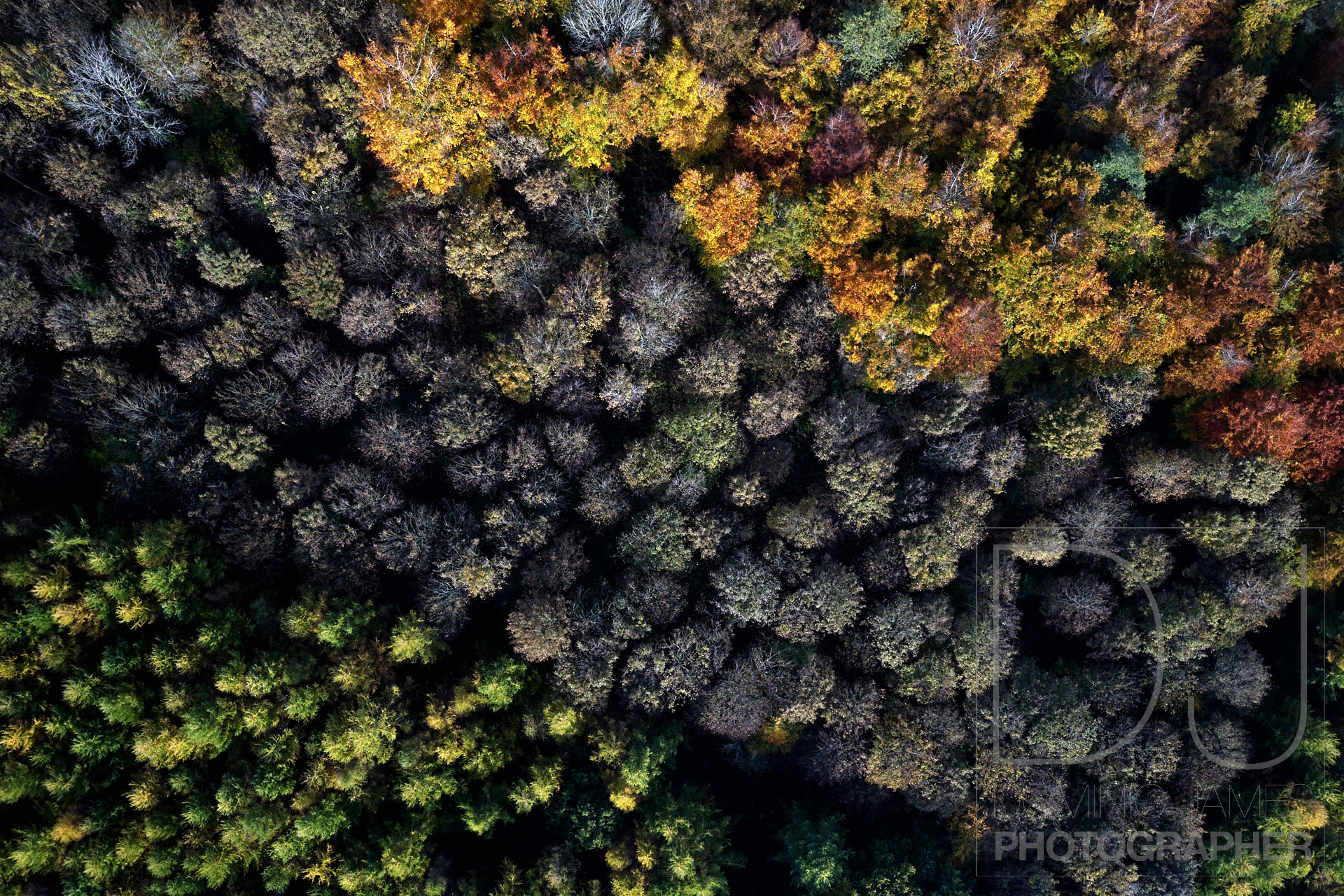 Autumn leaves photographed from a drone